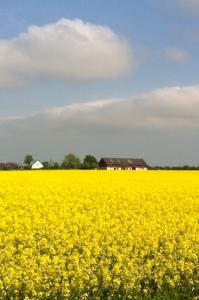 Vackraste Gotland vad du bjuder på vacker natur.