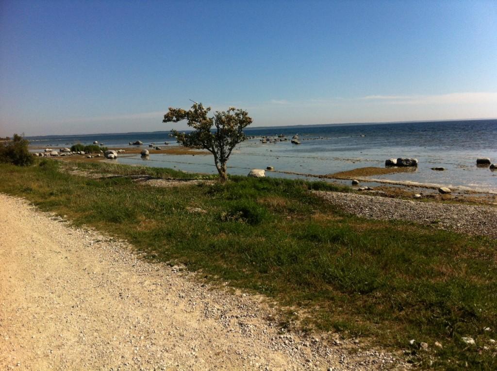 Ett ensamt träd som står där i vinden. Ute till havs står en fyr och här uppehåller sig massor av sälar att beskåda. Kanske inte kan se dem från land men med båt så. :)