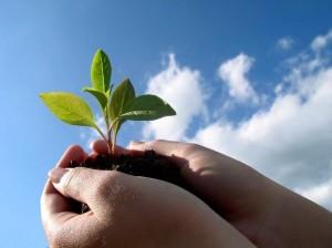 Vi är som en planta. Låt oss visa varje blad som slår ut.